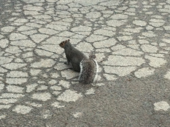 Fearless squirrel
