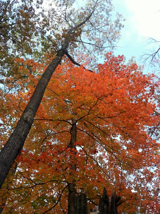 The beauty of autumn in Lenox, MA
