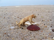 Little lioness I found on the beach